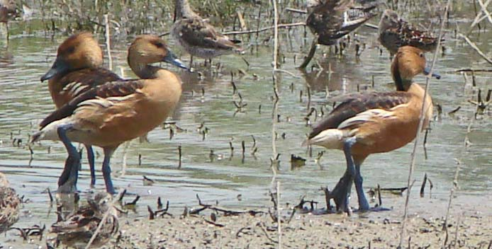 Birds Found In The Lower Rio Grande Valley Of South Texas,Fettucini Pasta